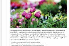 20 faktų apie visų dievinamas gėles