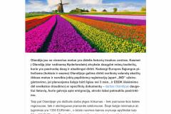 Darbas Olandijoje ir tai, ko galbūt dar negirdėjote apie šią šalį